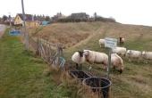 Palisade-graven set fra vejen. Tag hensyn til de græssende får.
