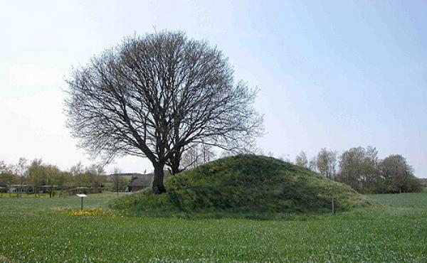 1: Dyssehøjen på marken ved Balle set fra nordøst.
