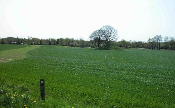 2: Balle-dyssen set fra bivejen nord for højen. I forgrundet pælen som markerer starten af trampestien over marken til dyssen.