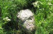 5: Jordfaste sten ses spredt i højen.