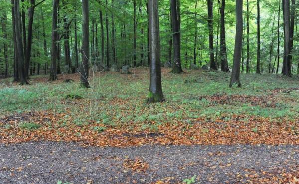 2: Langdyssen ligger idyllisk og let synlig i skovbunden ca. 50 meter øst for skovvejen