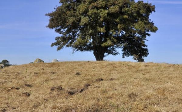 12: Oprindeligt var der blot registreret 27 skåltegn i stenen. Foto venligst udlånt af Prøhl / Milstreu
