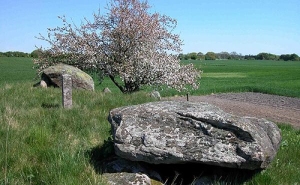 7: Langdyssens gravkamre omsluttes næsten helt af jordhøjen. Her set fra nordvest.