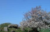1: Østenden af langdyssen nord for Hovlinen en flot forårsdag.