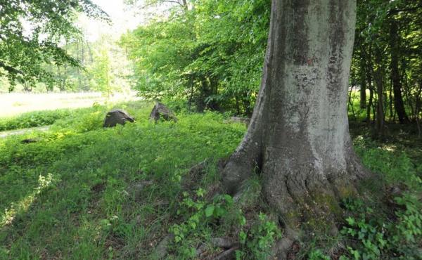 6: Langdyssens sydlige højende som måske stadig rummer gravkamre.