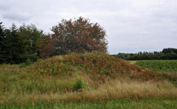 1: Velbevaret enkeltgravshøj ved Hærvejssporet.