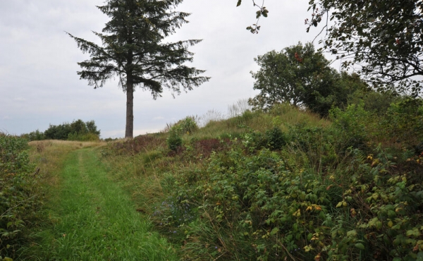 5: Gravhøj ud til stien langs Hærvejen set fra syd.