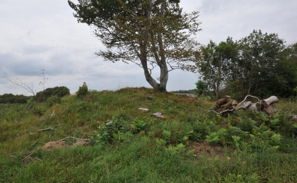 8: Stejlehøj - den nordligste af de 5 gravhøje har måske været et rettersted i middelalderen.