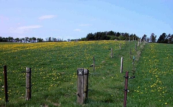 2: Den afmærkede trampesti til langdyssen. Her set fra Sognevejen øst for dyssen.
