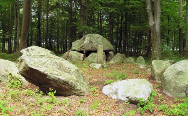 Den idyllisk beliggende langdysse i Oreby Skov ligger helt ud til skovvejen. Her set fra syd.