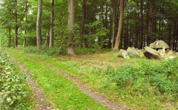 Panorama over langdyssen ud til skovvejen set fra sydøst.