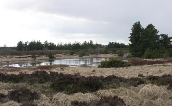 Stensbjerggaard-langdysse-09